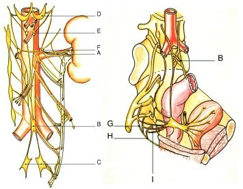 Un petit point anatomie pour mieux connaître vagin, pénis et anus.
